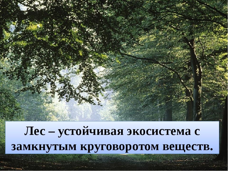Лес – устойчивая экосистема с замкнутым круговоротом веществ.