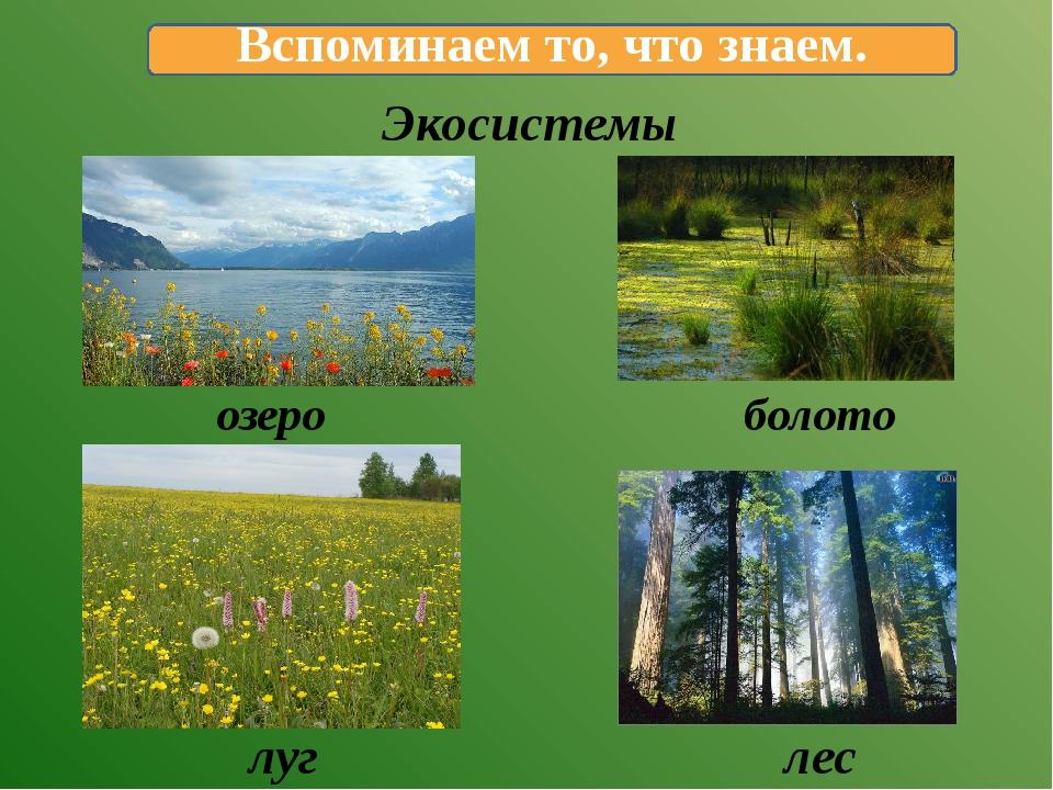 Экосистемы озеро болото луг лес Вспоминаем то, что знаем.