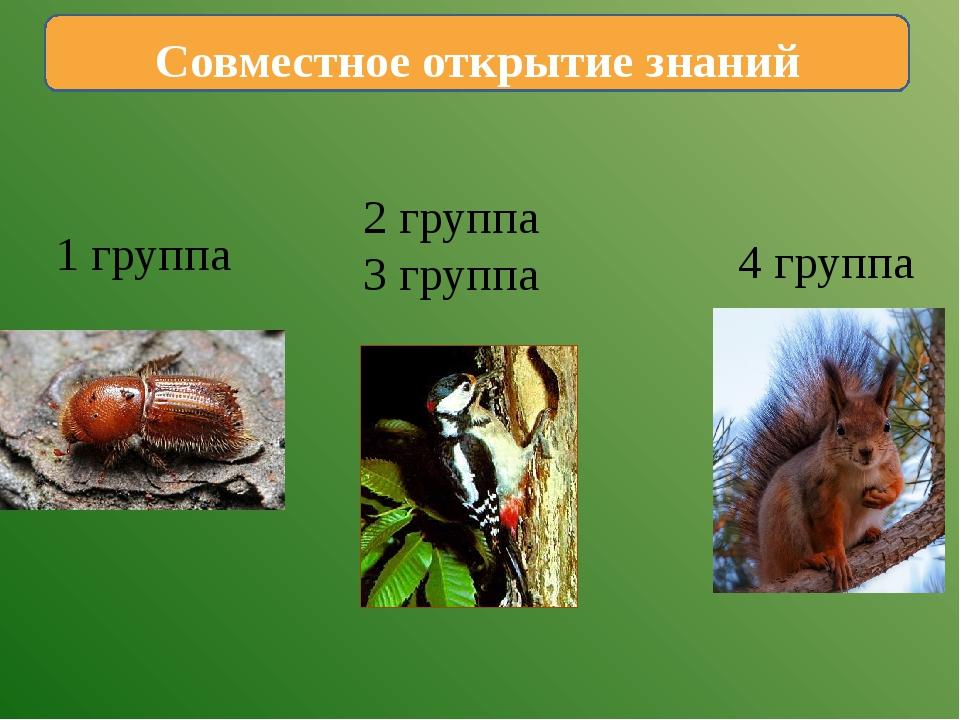 Совместное открытие знаний 1 группа 2 группа 3 группа 4 группа
