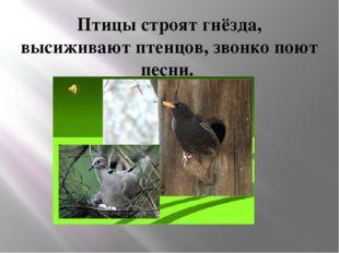 Птицы строят гнёзда, высиживают птенцов, звонко поют песни.