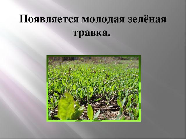 Появляется молодая зелёная травка.