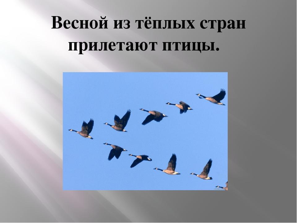 Весной из тёплых стран прилетают птицы.