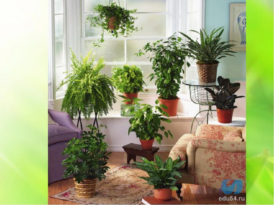 Комнатные растения в фото