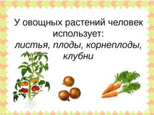 У овощных растений человек использует: листья, плоды, корнеплоды, клубни