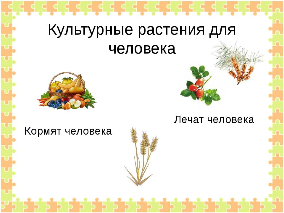 Культурные растения для человека Кормят человека Лечат человека