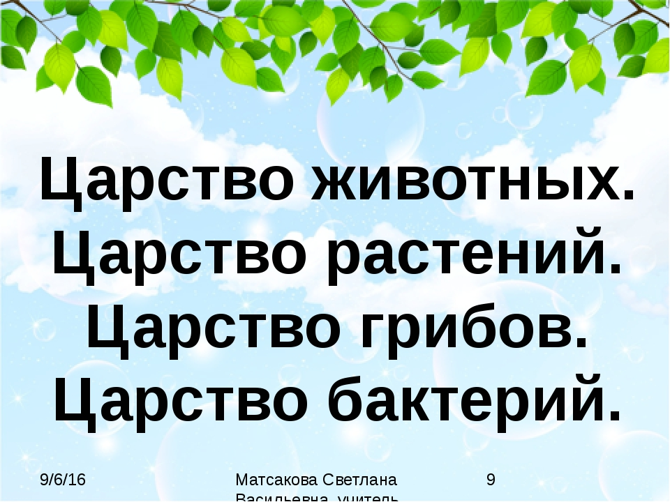 Царство животных. Царство растений. Царство грибов. Царство бактерий. Матсако...