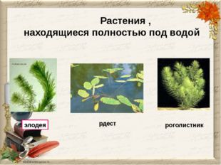 Растения , находящиеся полностью под водой роголистник элодея рдест