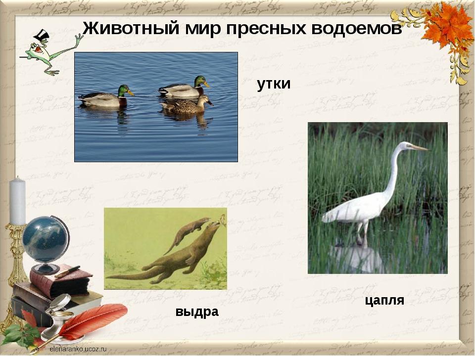 Животный мир пресных водоемов цапля утки выдра