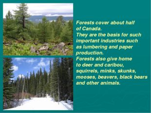 Forests cover about half of Canada. They are the basis for such important ind