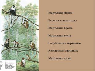 Мартышка Диана Белоносая мартышка Мартышка Бразза Мартышка-мона Голуболицая м