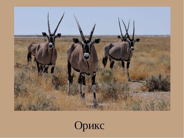 Орикс