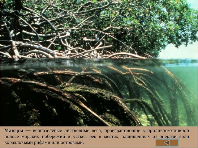 Мангры — вечнозелёные лиственные леса, произрастающие в приливно-отливной пол...