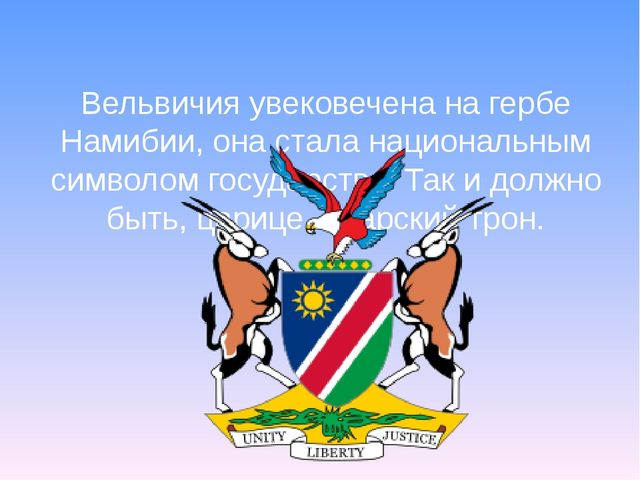 Вельвичия увековечена на гербе Намибии, она стала национальным символом госуд...