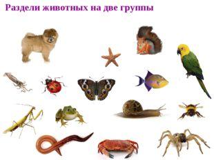 Раздели животных на две группы