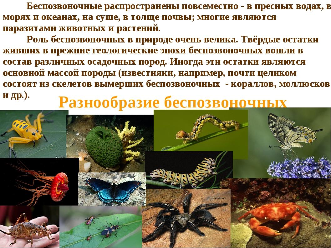 Беспозвоночные распространены повсеместно - в пресных водах, в морях и океан...