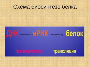 Схема биосинтезе белка