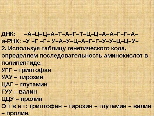 ДНК: –А–Ц–Ц–А–Т–А–Г–Т–Ц–Ц–А–А–Г–Г–А– и-РНК: –У –Г –Г– У–А–У–Ц–А–Г–Г–У–У–Ц–Ц–...