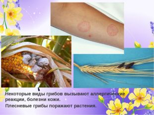 Некоторые виды грибов вызывают аллергические реакции, болезни кожи. Плесневые