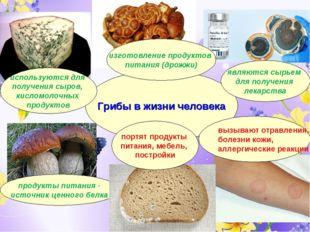 Грибы в жизни человека продукты питания - источник ценного белка используются