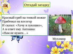 Отгадай загадку Красный гриб на тонкой ножке Прибежал на косогор И сказал: «Х