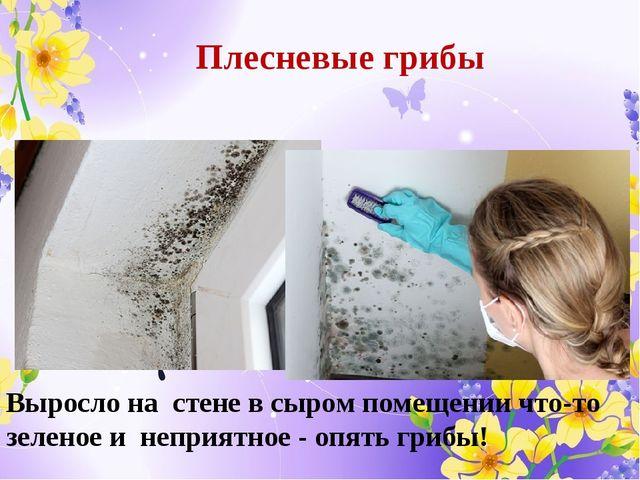 Выросло на стене в сыром помещении что-то зеленое и неприятное - опять грибы!...