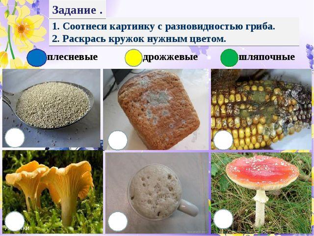 1. Соотнеси картинку с разновидностью гриба. 2. Раскрась кружок нужным цветом...