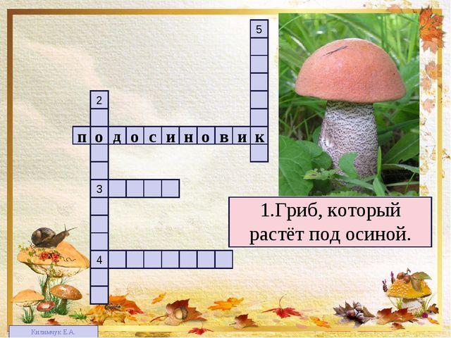 1 4 3 2 5 1.Гриб, который растёт под осиной. п в о н и с о о д и к Килимчук Е...
