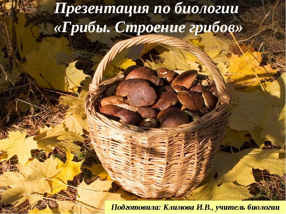 Презентация по биологии «Грибы. Строение грибов» Подготовила: Климова И.В., у...