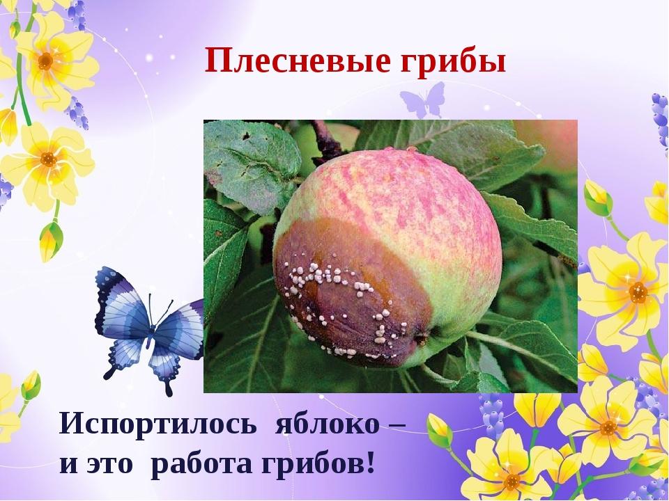 Испортилось яблоко – и это работа грибов! Плесневые грибы