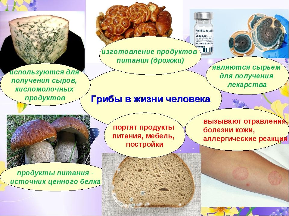 Грибы в жизни человека продукты питания - источник ценного белка используются...