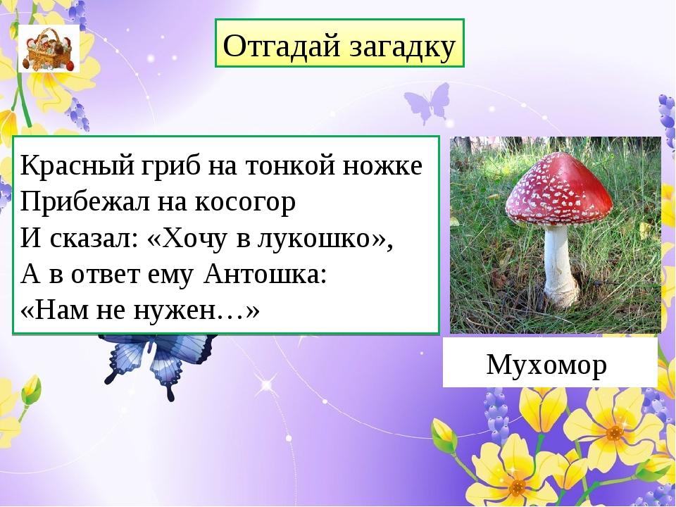 Отгадай загадку Красный гриб на тонкой ножке Прибежал на косогор И сказал: «Х...