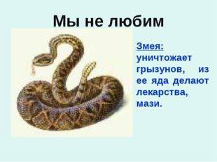 Мы не любим Змея: уничтожает грызунов, из ее яда делают лекарства, мази.