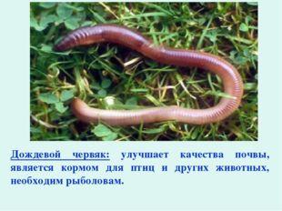 Дождевой червяк: улучшает качества почвы, является кормом для птиц и других ж
