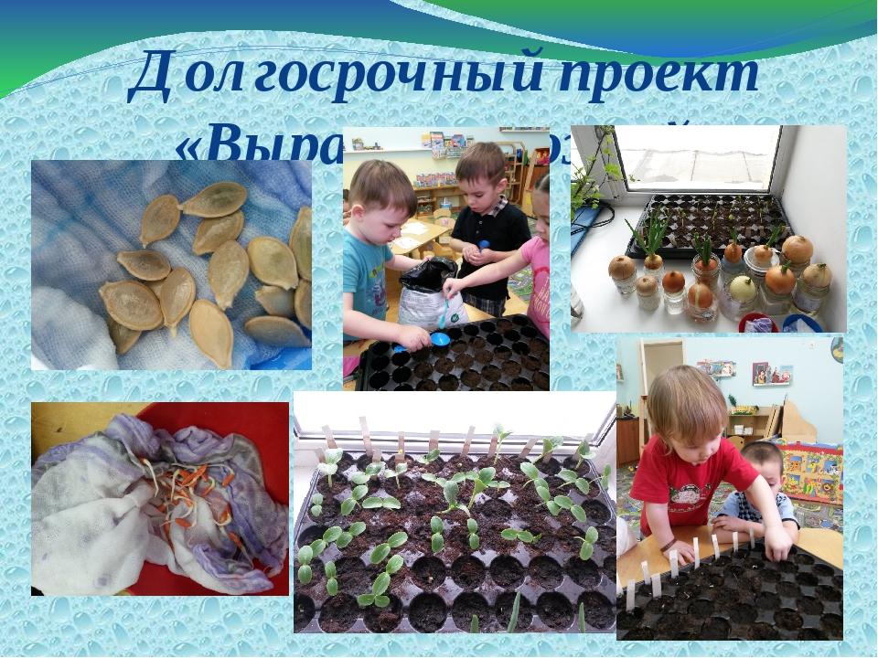 Долгосрочный проект «Вырасти урожай»