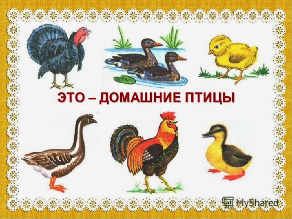 картинки животных и птиц для доу размножения петунии