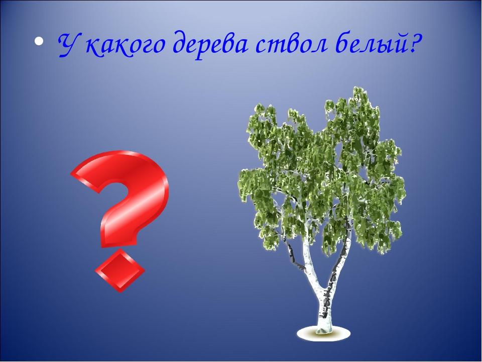 У какого дерева ствол белый?