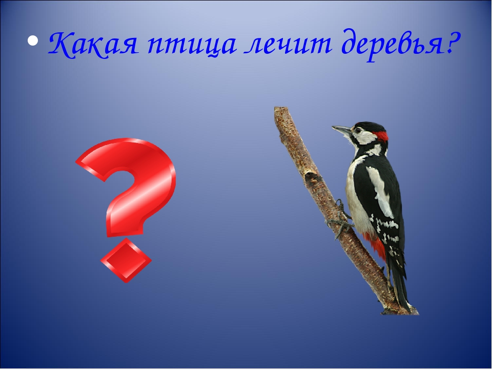 Какая птица лечит деревья?