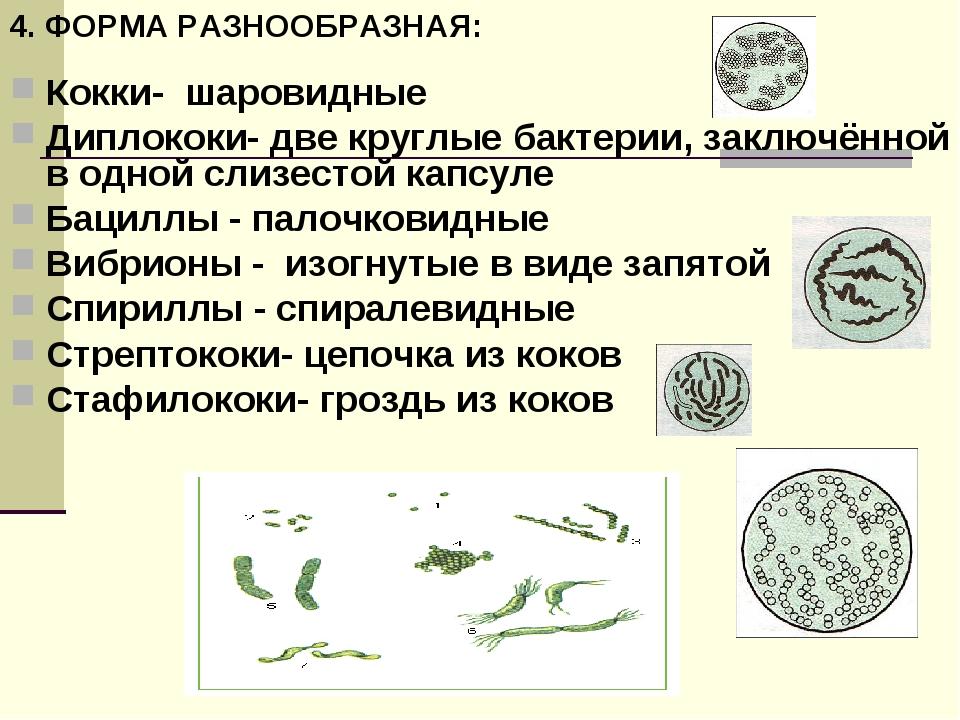 Кокки- шаровидные Диплококи- две круглые бактерии, заключённой в одной слизес...