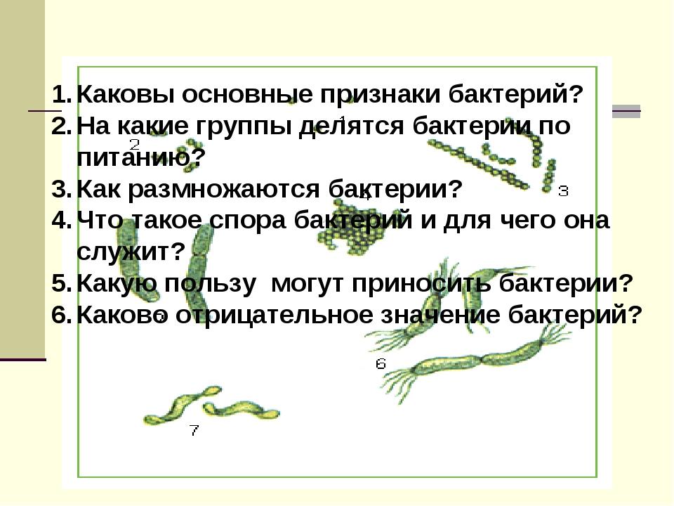Каковы основные признаки бактерий? На какие группы делятся бактерии по питани...