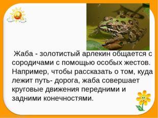 Жаба - золотистый арлекин общается с сородичами с помощью особых жестов. Напр