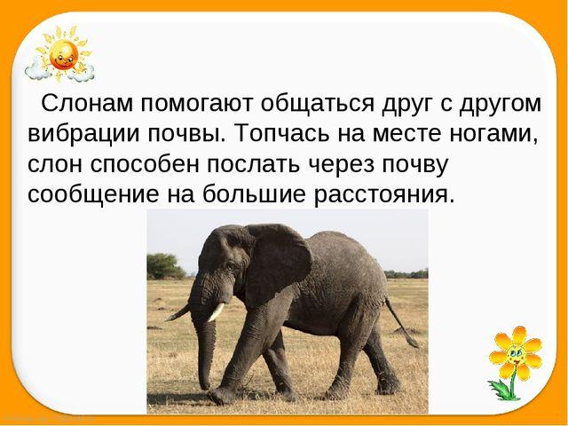 Слонам помогаютобщаться друг с другом вибрации почвы. Топчась на...