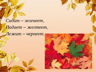 Сидит – зеленеет, Падает – желтеет, Лежит – чернеет.