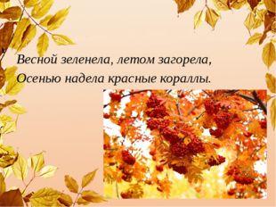 Весной зеленела, летом загорела, Осенью надела красные кораллы.