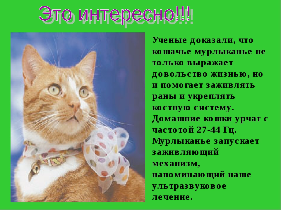 Ученые доказали, что кошачье мурлыканье не только выражает довольство жизнью,...