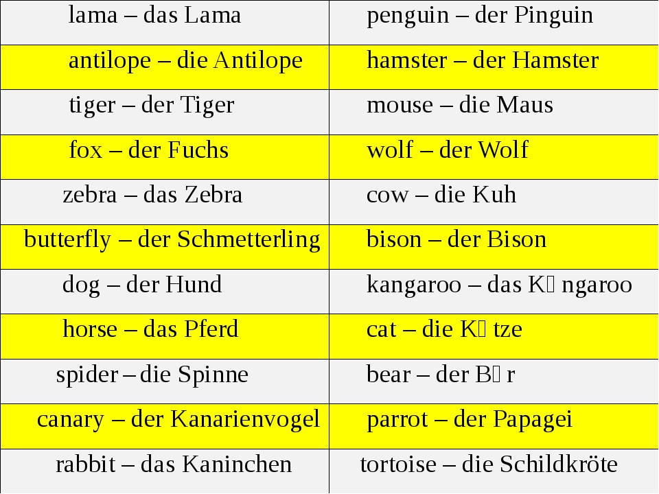 lama – dasLama penguin –derPinguin antilope– dieAntilope hamster –derHamster...
