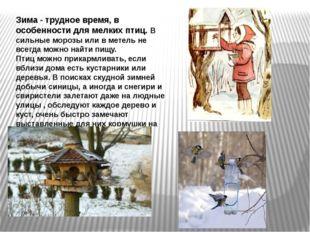 Зима - трудное время, в особенности для мелких птиц. В сильные морозы или в м