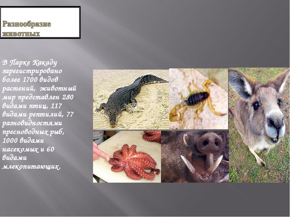В Парке Какаду зарегистрировано более 1700 видов растений, животный мир пре...