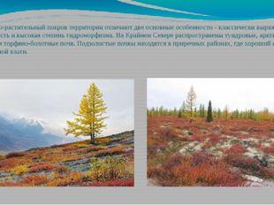 Почвенно-растительный покров территории отличают две основные особенности - к
