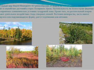 Растительный мир Ямало-Ненецкого АО разнообразен: от кедров на юге до мхов и