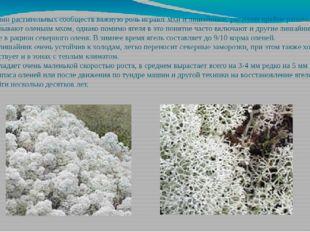 В сложении растительных сообществ важную роль играют мхи и лишайники, растени